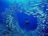 """Woods Hole Film Festival: """"Oceans"""""""